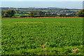 SU5929 : View over Cheriton Battlefield by David Martin