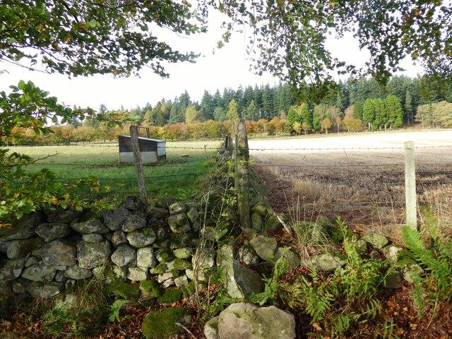 Field boundary near Skerryalva