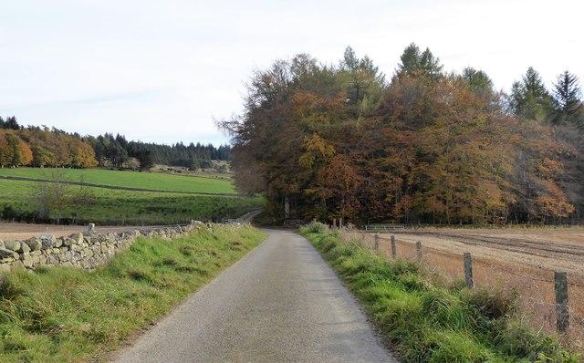 Approach to 'Netherlands' shelter belt