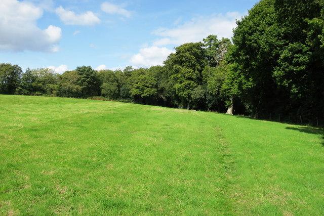 Bridleway along a field edge