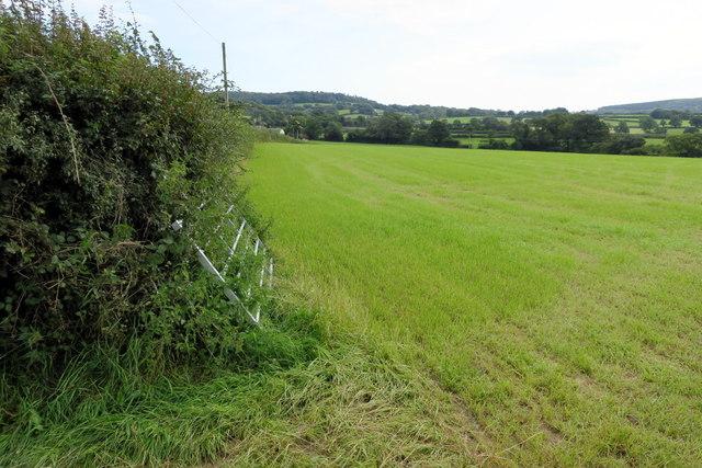 Silage Grass Field next to Wyke Road