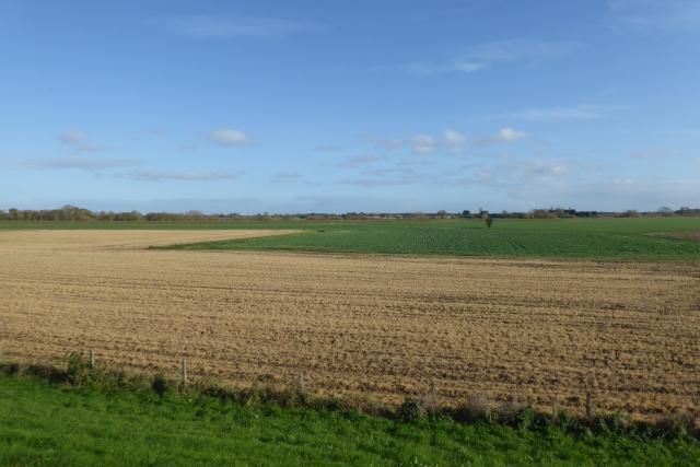 Fields near Lilac Farm
