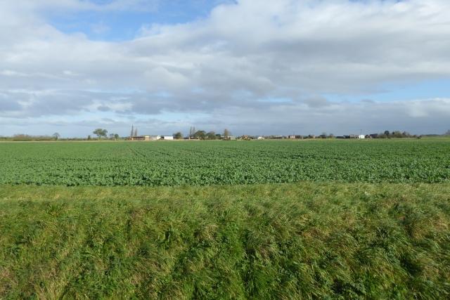 Farmland off Sand Lane