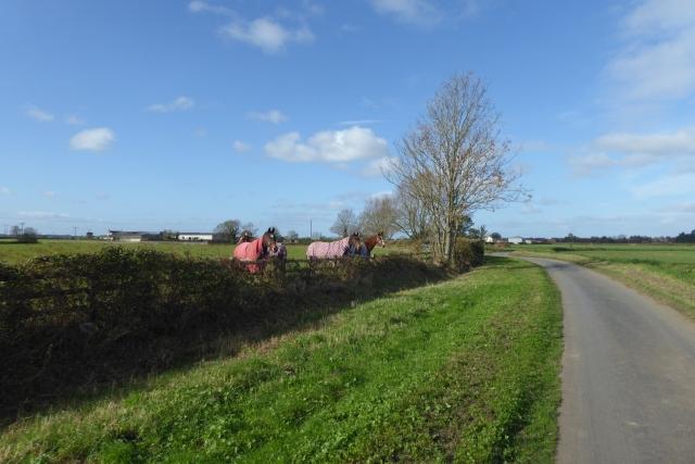 Horses at Rose Grove Farm