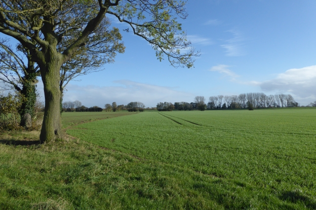 Fields off Ings Lane
