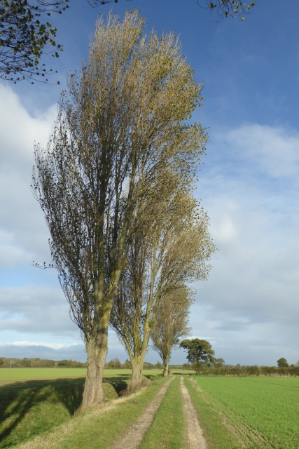 Trees beside Whinny Lane