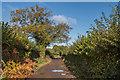 TQ2057 : Track to Langley Bottom Farm by Ian Capper