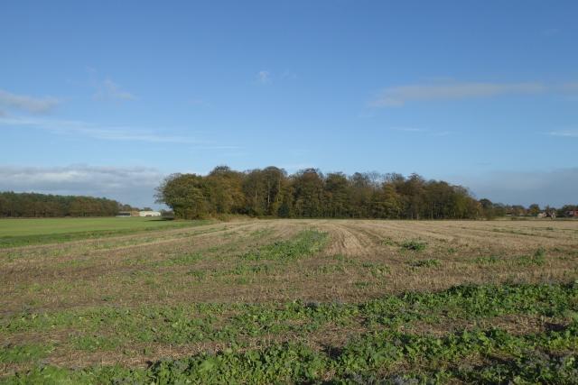 Farmland beside Stewart Lane