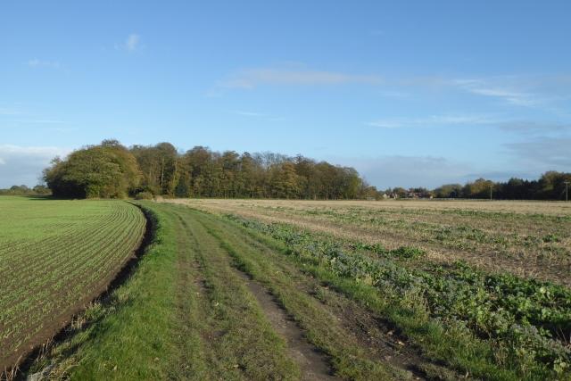 Bridleway to Coachroad Plantation