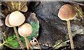 J3977 : Fungi, Redburn Country Park, Holywood (October 2017) by Albert Bridge