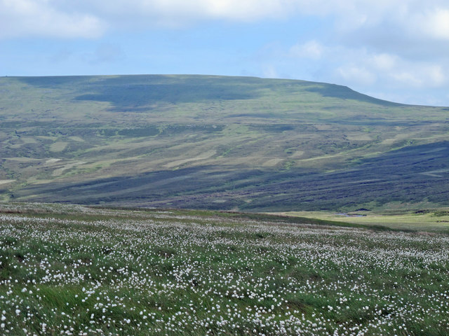 Bog cotton in the valley of Maize Beck