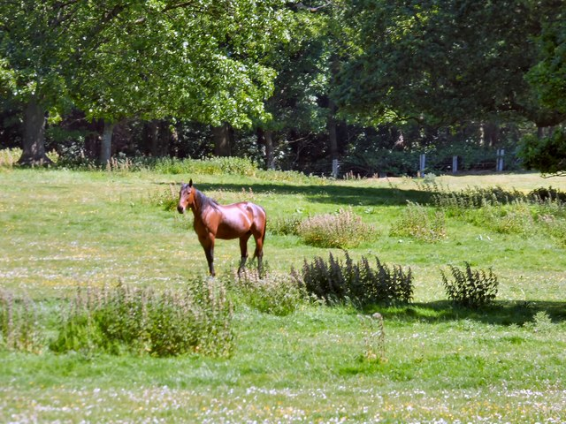 Horse at Bodrhyddan