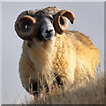 NT2318 : A tup on East Muchra Hill : Week 43