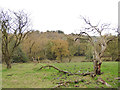 SE0737 : Dead tree above Cow House Beck by Stephen Craven