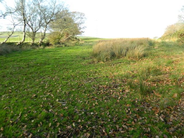 Grassland near Castellau Uchaf Farm