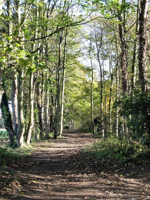 Teesdale Way path