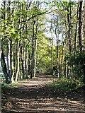 NZ2413 : Teesdale Way path by Gordon Hatton