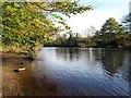 NZ2413 : The Tees near Low Coniscliffe by Gordon Hatton