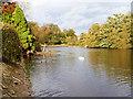 NZ8808 : River Esk, Downstream at Chainbridge by David Dixon