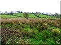 H5566 : Rushy ground, Usnagh by Kenneth  Allen