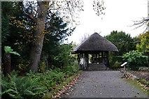 TQ1352 : Polesden Lacey: The rustic bridge in the winter garden by Michael Garlick