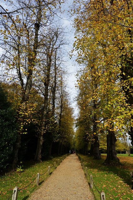 Polesden Lacey: The tree lined path to the house
