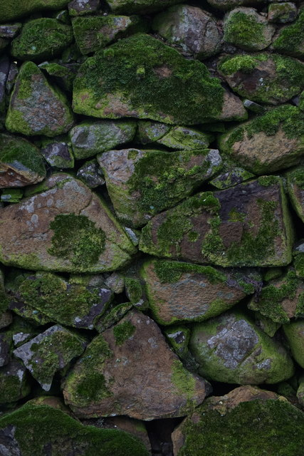 Moss on a wall, Halligarth, Baltasound