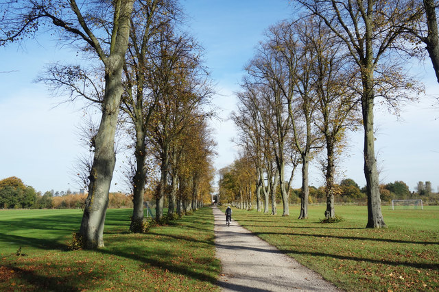 Avenue of Trees on Agars Plough