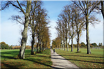 SU9778 : Avenue of Trees on Agars Plough by Des Blenkinsopp