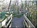 TG3520 : Barton Broad Boardwalk by G Laird