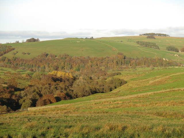 Rough pastures above the wooded cleugh of Acton Burn