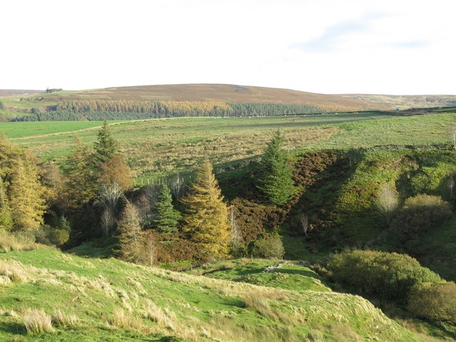 The cleugh of Acton Burn (4)