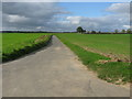 TG4114 : Cross Road, near Thurne by G Laird