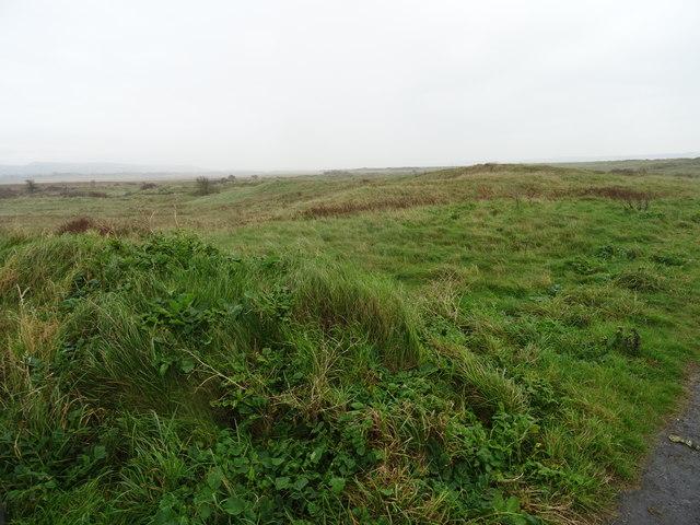 National Nature Reserve at Pembrey Burrows