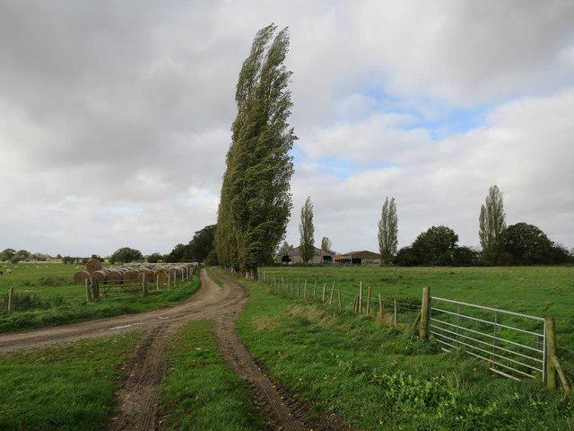 Path to Priory Farm