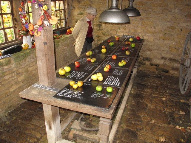 Display of rare apple varieties, Snowshill Manor
