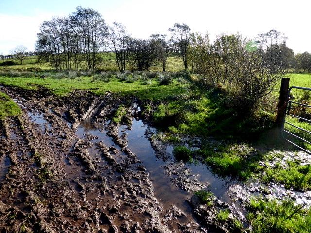 Muddy ground, Blackfort