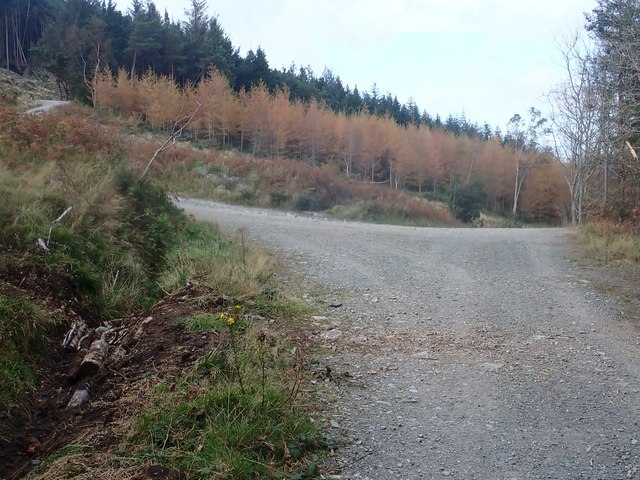 Forestry road junction in Donard Wood