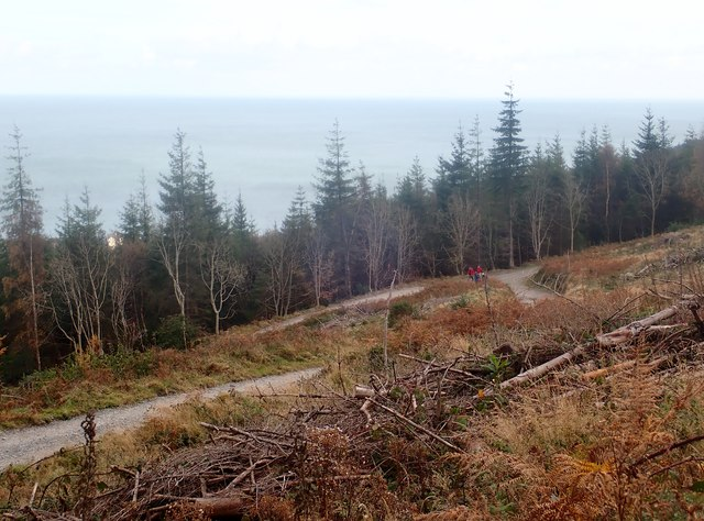 Cut over section of Donard Wood