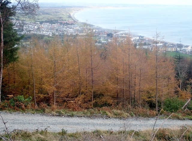 The town of Newcastle from Donard Wood