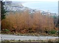 J3630 : The town of Newcastle from Donard Wood by Eric Jones