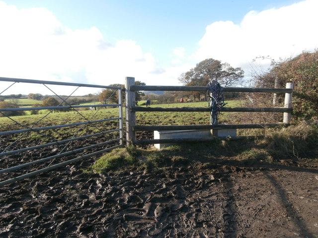 Horses in a field near Llwynmilwas Farm