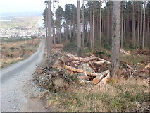 J3629 : Log piles alongside forestry road in Donard Wood by Eric Jones