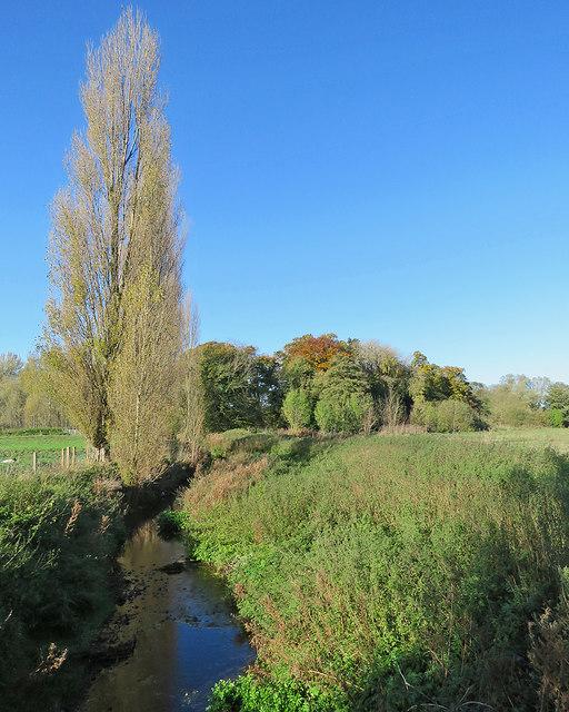 The Cam near Whittlesford