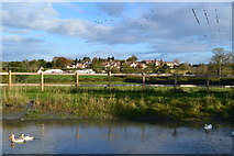 ST6990 : Houses at Bibstone seen across the pond at Townwell by David Martin
