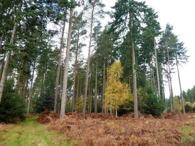 Woodland near West Newton in Norfolk
