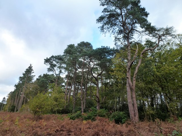 Woodland south of West Newton in Norfolk