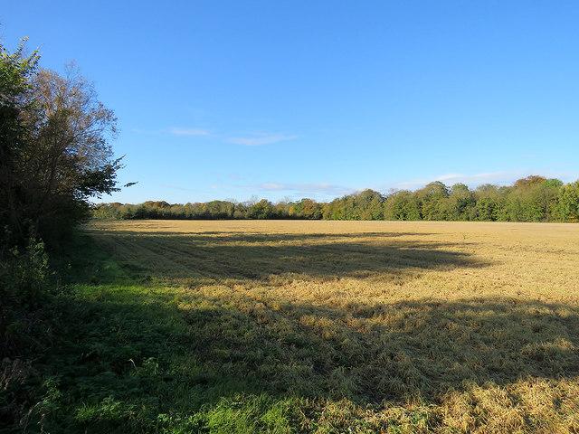 Little Shelford: a field north of Bradmere Lane