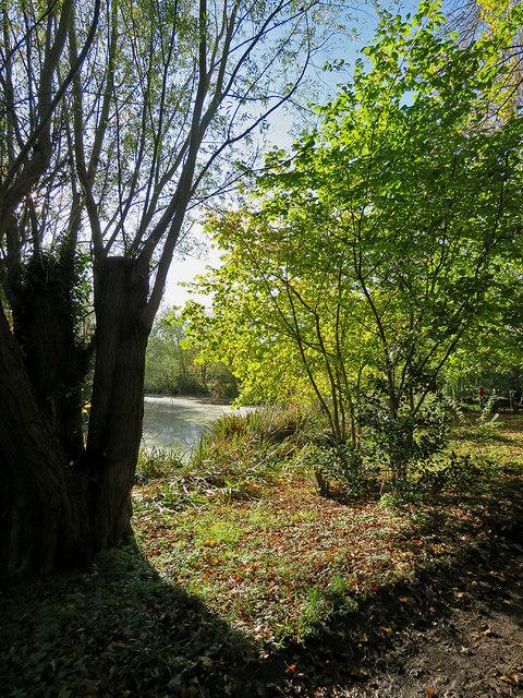 Little Shelford: Bradmere Pond in November