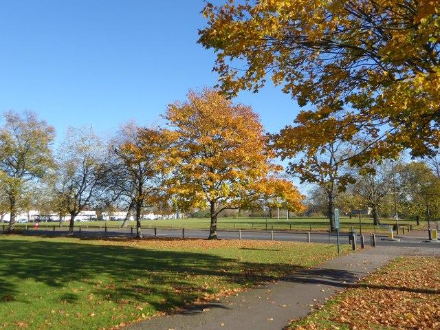 Autumn on Plumstead Common
